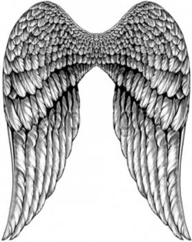 ANGEL WINGS   (1067)