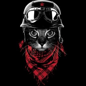 ADVENTURER CAT (1037)