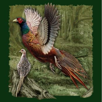 RING-NECKED PHEASANT (455)