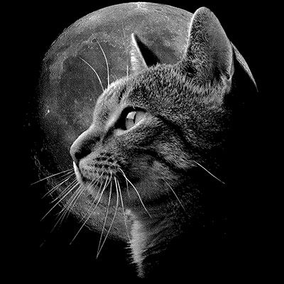 HUPPARIMEKKO MUSTA - CAT MOON (701)