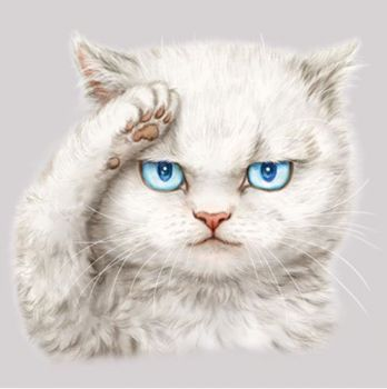 SERIOUS CAT (446)