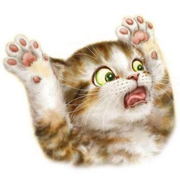 SURPRISED CAT (399)