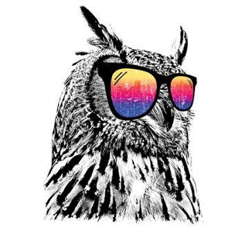 COOL OWL (450)