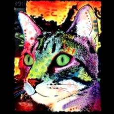 CURIOSITY CAT (491)