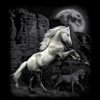 NAISTEN PAITA musta - WHITE HORSE WILDERNESS (949)