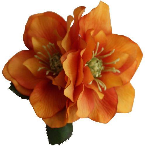 BRIGITTE Double Orange Hellebore