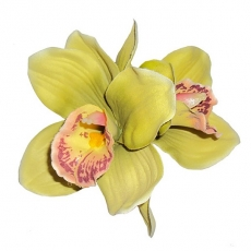 GINGER Double Green Orchid Hair Flower