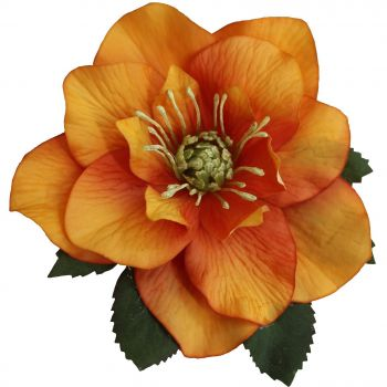 BRIGITTE Single Orange Hellebore