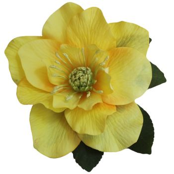 BRIGITTE Single Yellow Hellebore