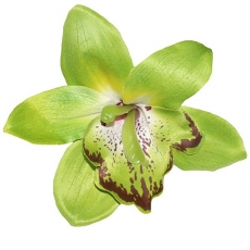 GIGI Green Orchid Hair Flower